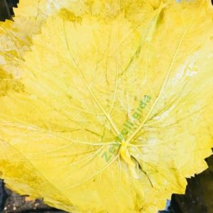Beypazarı Salamur Yaprak ( 1 Kg )